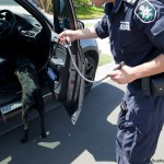 Federal police officer leading sniffer dog through car