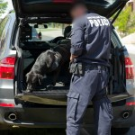 Federal polic officer leading a sniffer dog through car boot