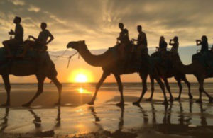 People ridign camels on the beach